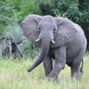 Wild refuge for the last elephants in southern....